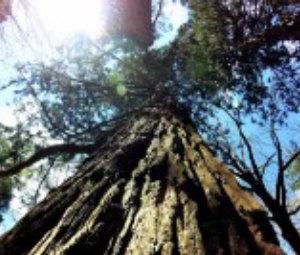 sequoie di pavullo